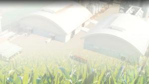 บริษัทนานาพรรณ ผู้จัดจำหน่าย นำเข้า ส่งออกข้าว ถั่ว ข้าว ธัญพืช วัตถุดิบอาหารสัตว์